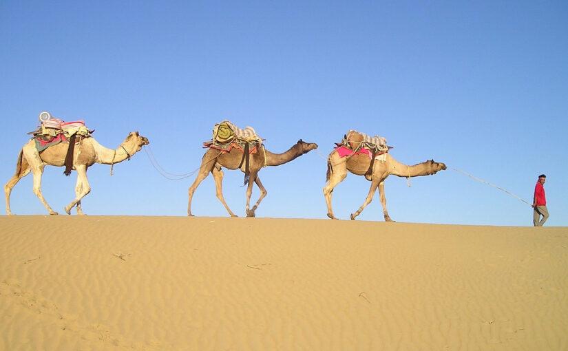 Kamelendrijver